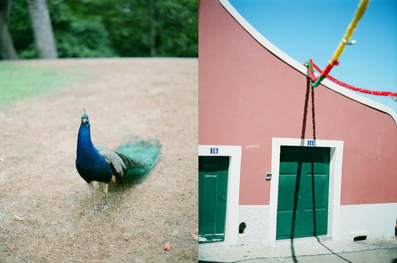 reportaje fotografo oporto porto lisboa familia (15)